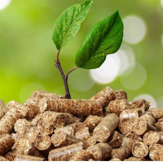 Immagine biomassa